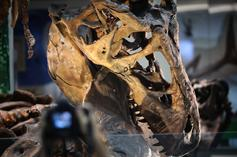 "Canada Discovers T-Rex's Dinosaur Cousin Named ""Reaper Of Death"""