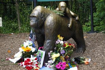 11,000 Americans Reportedly Voted For Harambe Instead Of Donald Trump Or Hillary Clinton