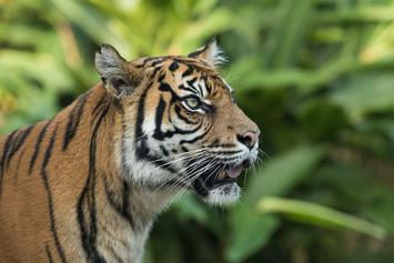 """""""Tiger King"""" Joe Exotic Wants Either Of These Actors To Portray Him Onscreen"""